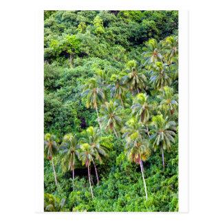 Paradise island coconut palms postcard