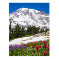 Paradise Mt. Rainer Postcard