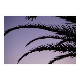 Paradise Palm Tree Sunset Posters