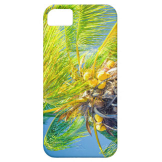 Paradiso Tropicale - And The Sky Sings iPhone SE/5/5s Case
