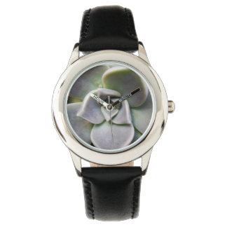 Paraguayense de Graptopetalum Relojes De Mano