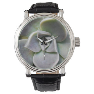 Paraguayense de Graptopetalum Relojes De Pulsera