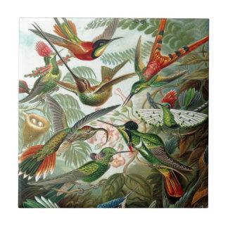 Paraíso colorido de los pájaros del tarareo del ar azulejos