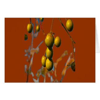 PARAISO FRUIT FOR OBATALA CARD