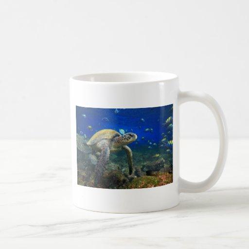 Paraíso subacuático de las Islas Galápagos de la t Taza De Café
