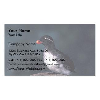 Parakeet Auklet Business Card