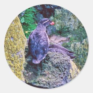 Parakeet Auklet Classic Round Sticker