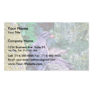 Parakeet Auklet Double-Sided Standard Business Cards (Pack Of 100)