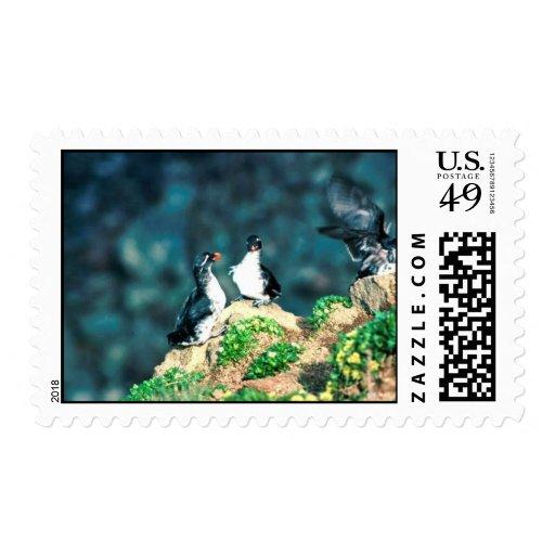 Parakeet Auklet Postage