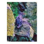 Parakeet Auklet Postcards