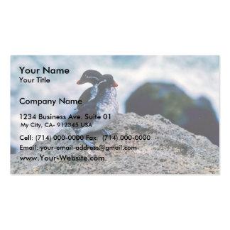 Parakeet Auklets Business Card