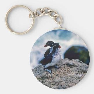 Parakeet Auklets Key Chains