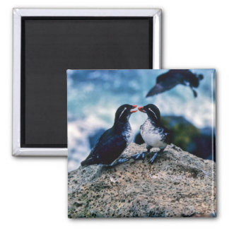 Parakeet Auklets Magnets
