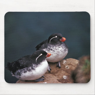 Parakeet Auklets Mouse Pads