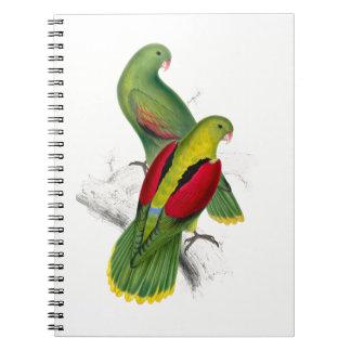 Parakeet con alas carmesí del vintage libreta espiral