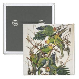 "Parakeet de Carolina, de ""pájaros de América"", 182 Pins"
