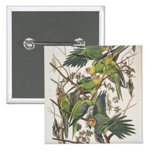 "Parakeet de Carolina, de ""pájaros de América"", 182 Pin Cuadrado"