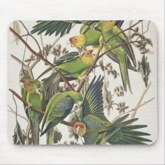 """Parakeet de Carolina, de """"pájaros de América"""", 182 Tapetes De Ratones"""
