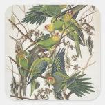 """Parakeet de Carolina, de """"pájaros de América"""", Pegatina Cuadrada"""