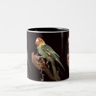 Parakeet de Carolina extinto Taza De Dos Tonos