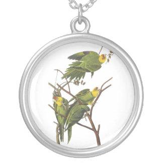 Parakeet de Carolina Juan Audubon Joyeria