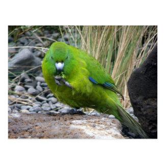 Parakeet de la isla de contrarios postales