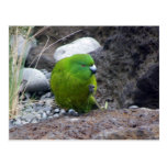 Parakeet de la isla de contrarios tarjeta postal