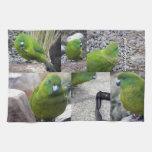 Parakeet de la isla de contrarios toalla de cocina