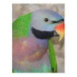Parakeet de Moustached Postales