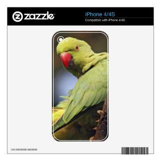 Parakeet de Roseringed, parque nacional de iPhone 4S Calcomanía