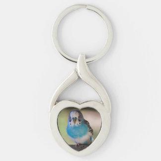 Parakeet del llavero de la forma del corazón llavero plateado en forma de corazón