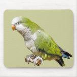Parakeet del monje alfombrilla de ratones