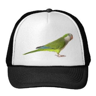 Parakeet del monje gorra