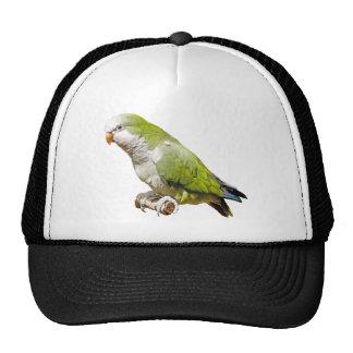 Parakeet del monje gorras de camionero