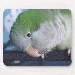 Parakeet del Quaker del Doin'? de Whatcha Alfombrillas De Ratón