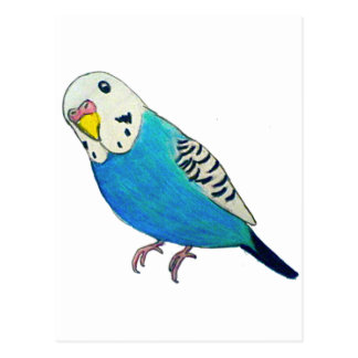 Parakeet Drawing Postcard