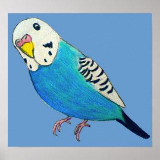 Parakeet Drawing Poster