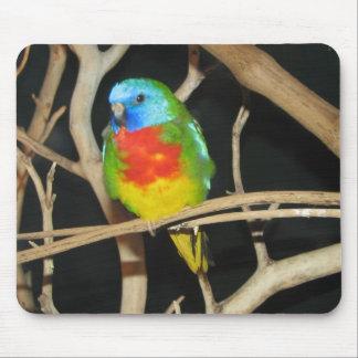 Parakeet Escarlata-De pecho - splendida de Neophem Mousepads