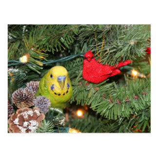 Parakeet in a Christmas tree Postcard