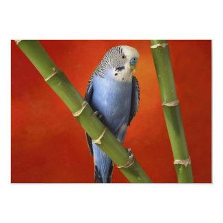 """parakeet invitación 5"""" x 7"""""""