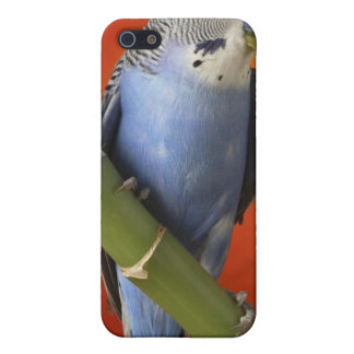parakeet iPhone SE/5/5s cover
