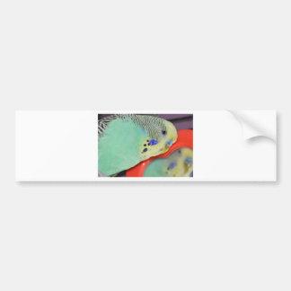 Parakeet looking in mirror bumper sticker
