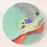Parakeet looking in mirror drink coaster