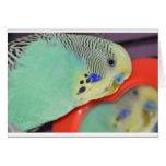 Parakeet looking in mirror greeting cards