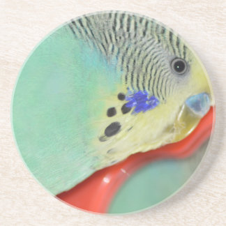 Parakeet looking in mirror sandstone coaster