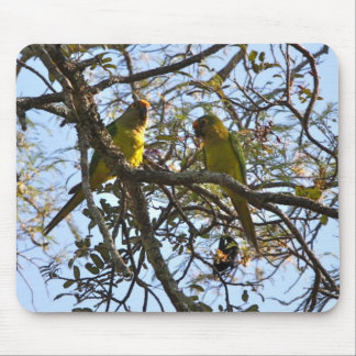 Parakeet Melocotón-afrontado Alfombrillas De Ratón