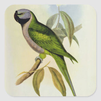 Parakeet: Palaeornis Derbianus, c.1850 Square Sticker