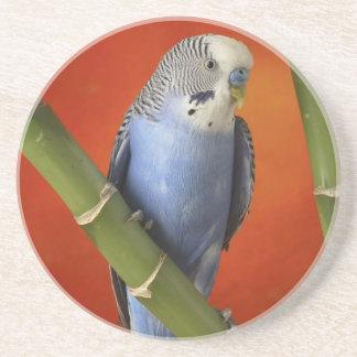 parakeet posavasos de arenisca