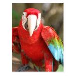 Parakeet Post Cards
