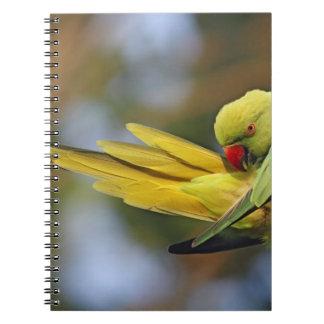 Parakeet preening, nacional de Roseringed de Keola Libretas Espirales
